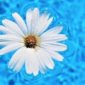 daisy-flower-5147010_1920